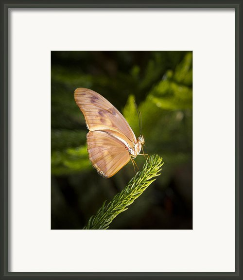 Best Side Of The Butterfly Framed Print By Jean Noren