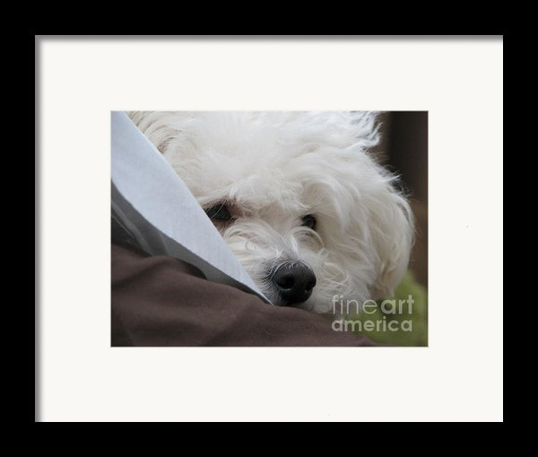 Molly Framed Print By Michael Krek