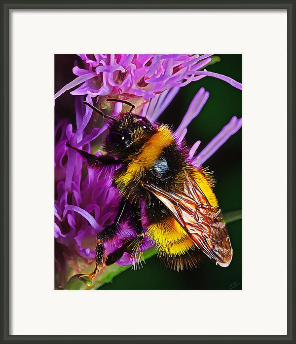 Big Dusty Bumble Framed Print By Bill Caldwell -        Abeautifulsky Photography