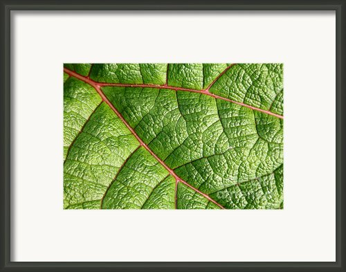 Big Green Leaf 5d22460 Framed Print By Wingsdomain Art And Photography