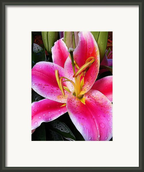 Big Pink Framed Print By Abeautifulsky  Photography