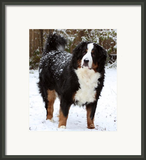 Big Sam Framed Print By Patti Whitten