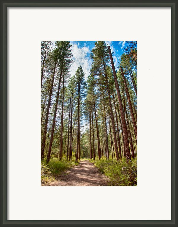 Big Valley Views Mvsta Trail Framed Print By Omaste Witkowski