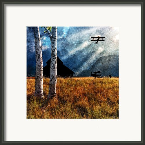Birch Trees And Biplanes  Framed Print By Bob Orsillo