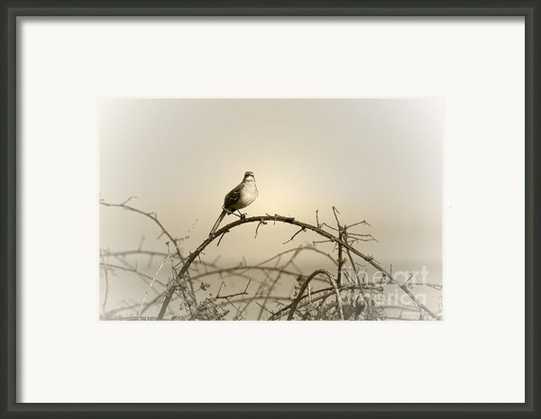 Bird In The Briar Framed Print By Artist And Photographer Laura Wrede
