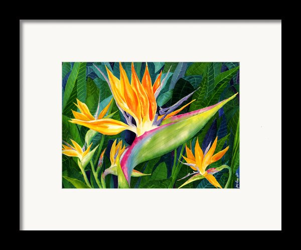 Bird-of-paradise Framed Print By Janis Grau