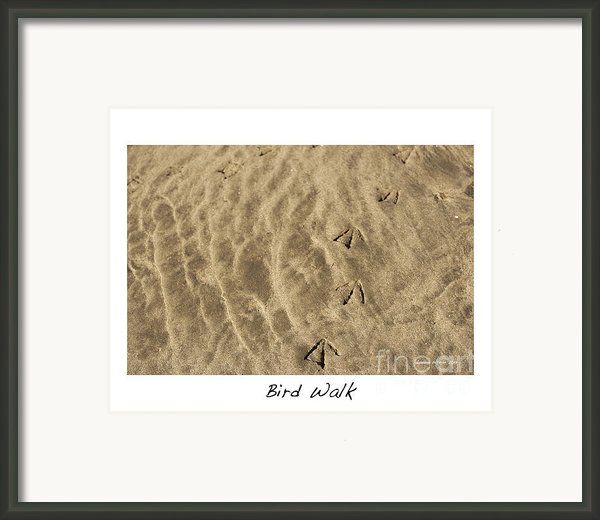 Bird Walk Framed Print By Artist And Photographer Laura Wrede
