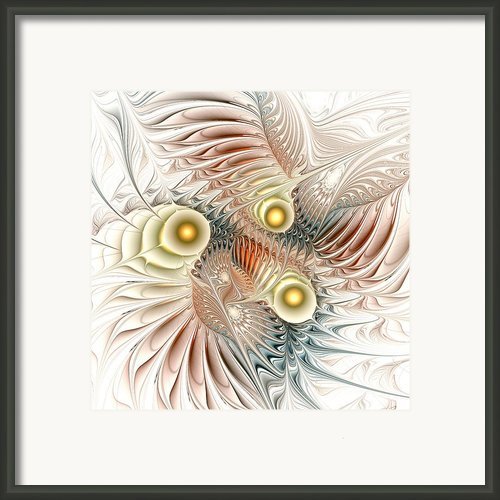 Birds Of Paradise Framed Print By Anastasiya Malakhova