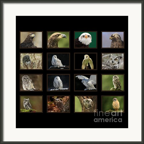 Birds Of Prey Of Canada Framed Print By Inspired Nature Photography By Shelley Myke