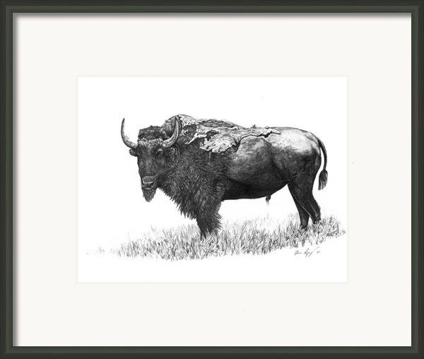 Bison Framed Print By Aaron Spong