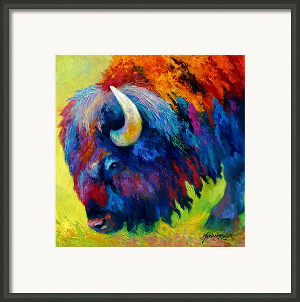 Bison Portrait Ii Framed Print By Marion Rose
