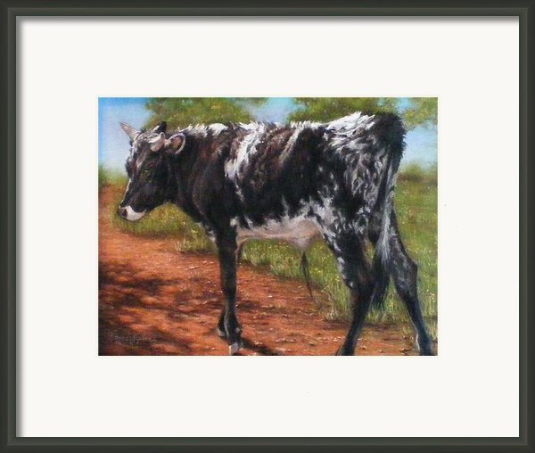 Black And White Shorthorn Steer Framed Print By Denise Horne-kaplan