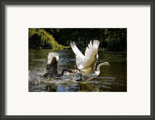 Black Chases White Framed Print By Paul W Sharpe Aka Wizard Of Wonders