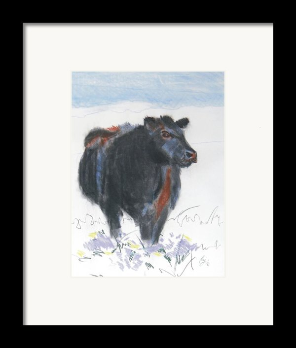 Black Cow Drawing Framed Print By Mike Jory