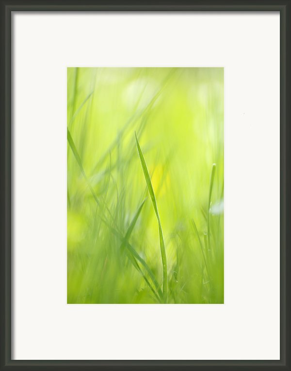 Blades Of Grass - Green Spring Meadow - Abstract Soft Blurred Framed Print By Matthias Hauser