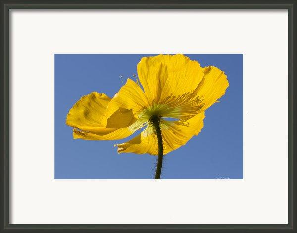 Bloom Time Framed Print By Heidi Smith