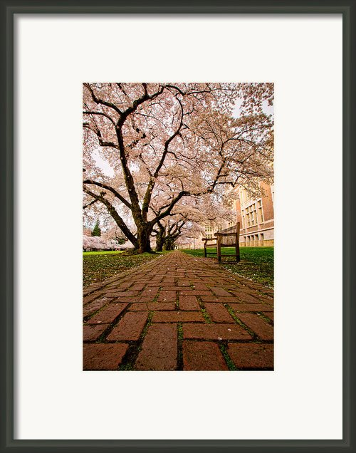 Blooming Giants Framed Print By Dan Mihai