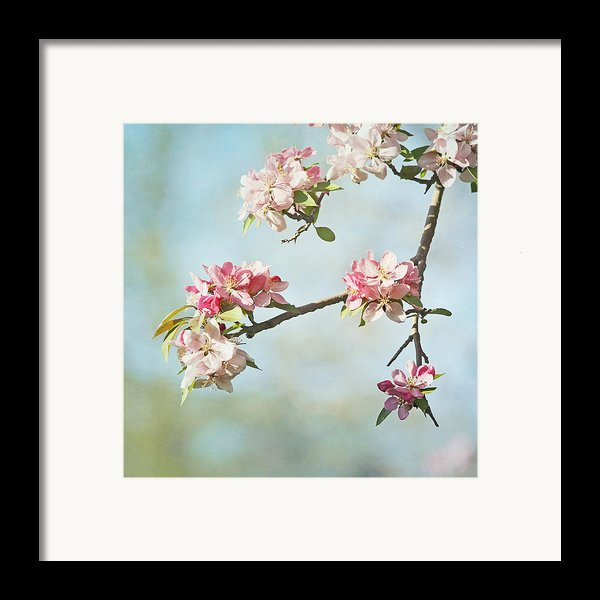 Blossom Branch Framed Print By Kim Hojnacki