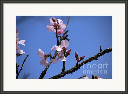 Blossoming Skyward Framed Print By Leia Burt