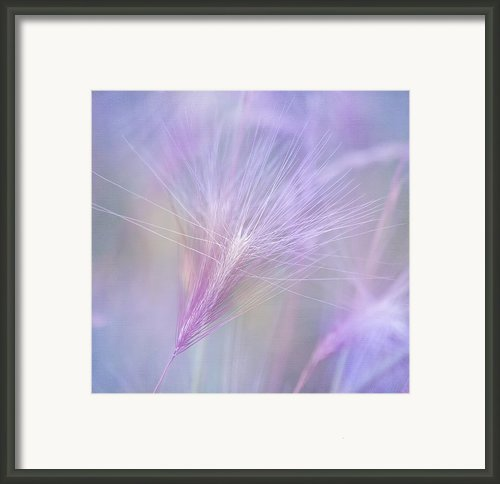 Blowing In The Wind Framed Print By Kim Hojnacki