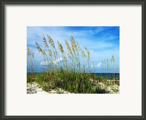 Blowing In The Wind Framed Print By Mel Steinhauer