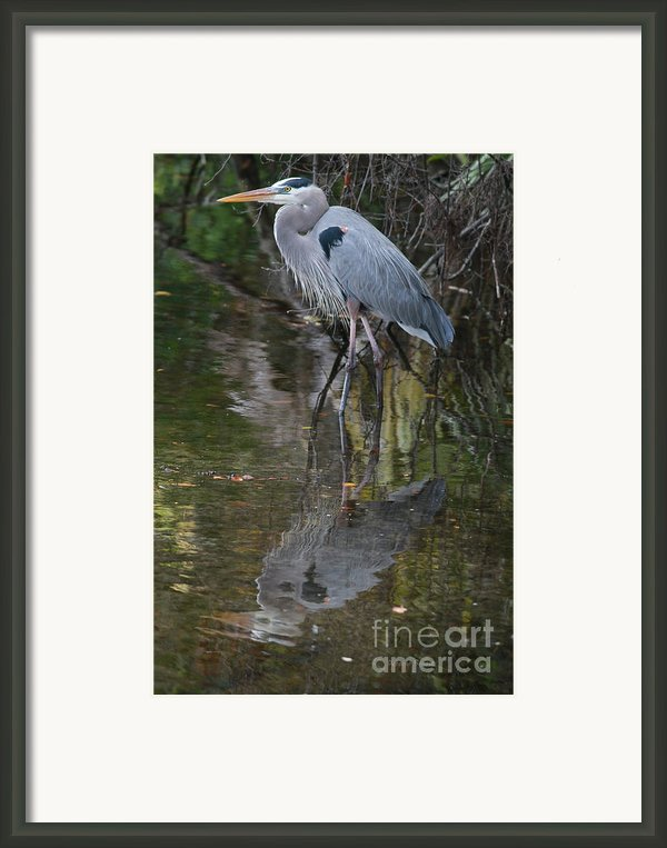 Blue 1212 Framed Print By Deborah Benoit