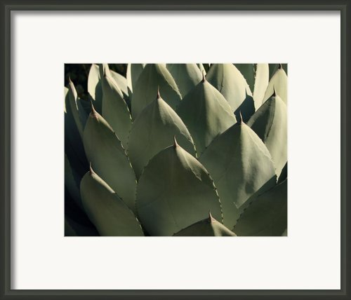 Blue Aloe Framed Print By Ellen Henneke