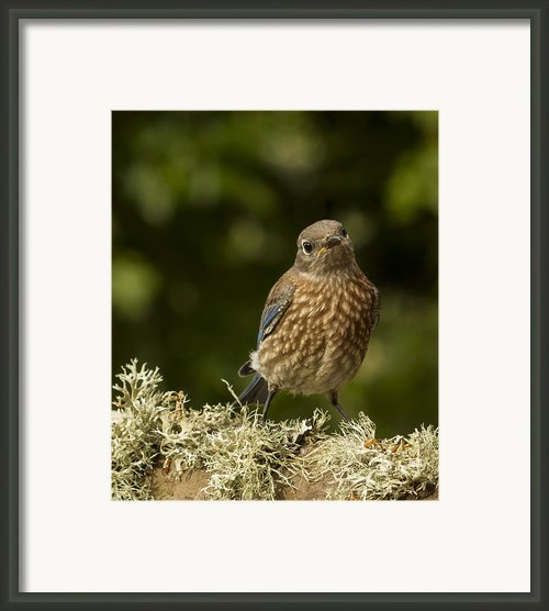 Blue Baby Framed Print By Jean Noren