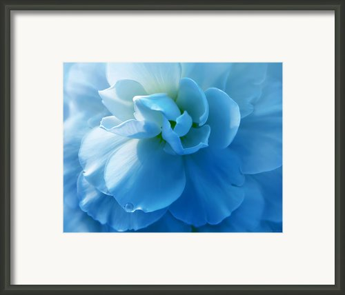Blue Begonia Flower Framed Print By Jennie Marie Schell