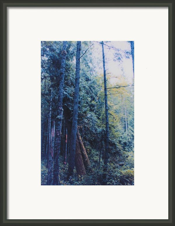 Blue Forest By Jrr Framed Print By First Star Art