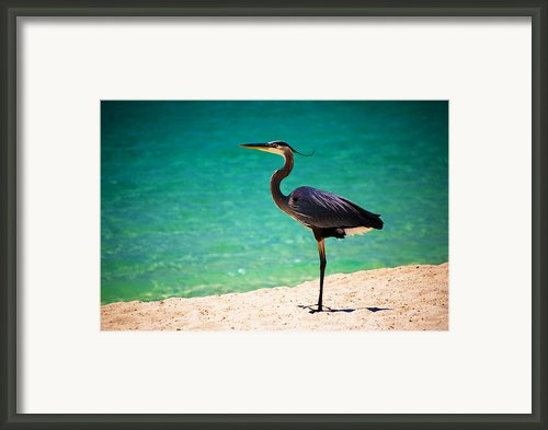 Blue Herring Framed Print By Christopher Lugenbeal