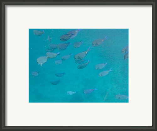 Blue Life Framed Print By Michael Glenn