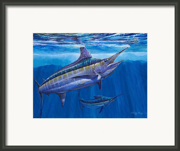 Blue Marlin Bite Off001 Framed Print By Carey Chen