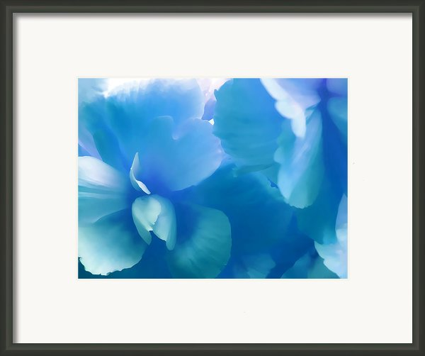 Blue Melody Begonia Floral Framed Print By Jennie Marie Schell