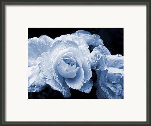 Blue Roses With Raindrops Framed Print By Jennie Marie Schell