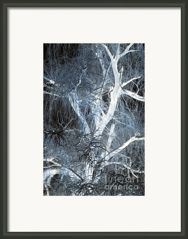 Blue Snow Framed Print By Kathleen Struckle
