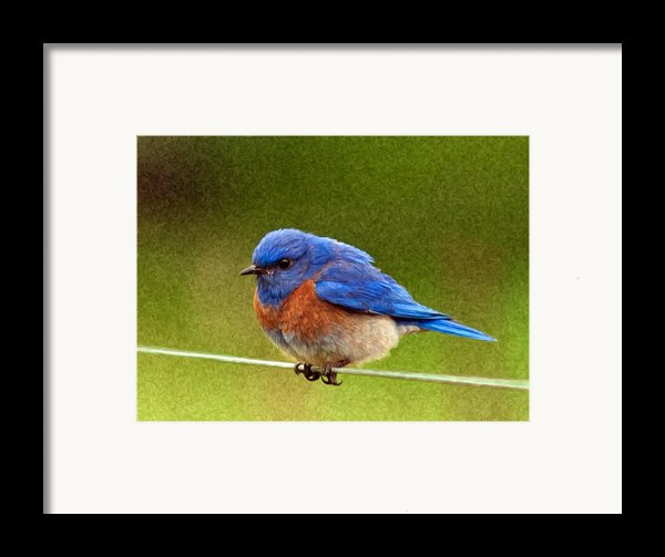 Bluebird  Painting Framed Print By Jean Noren