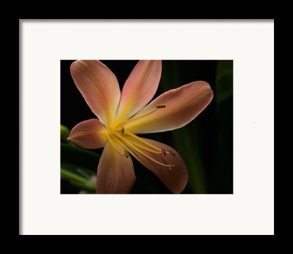 Bluete 3 Framed Print By Antonio Castillo