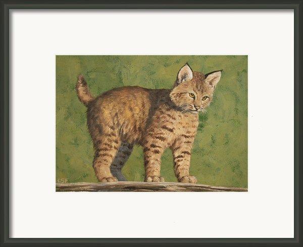 Bobcat Kitten Framed Print By Crista Forest