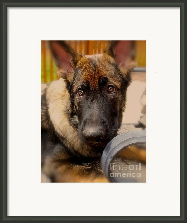 Bogart Framed Print By Christie Morgans