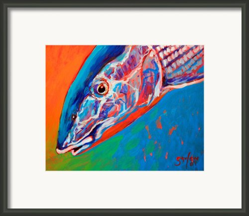 Bonefish Closeup Framed Print By Mike Savlen