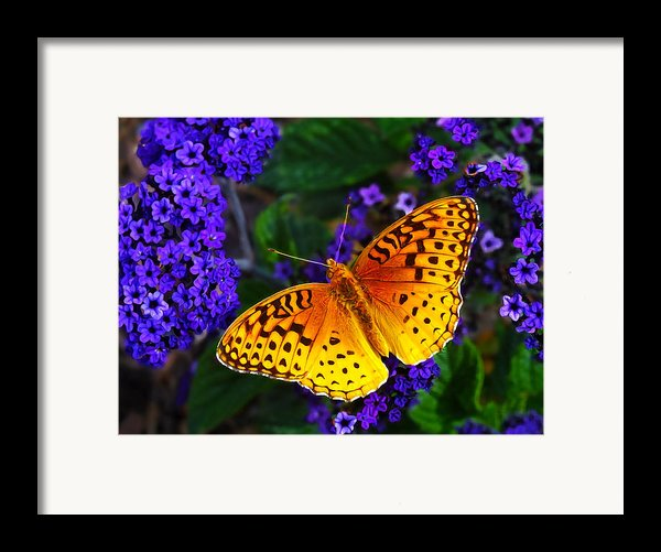 Boothbay Butterfly Framed Print By Bill Caldwell -        Abeautifulsky Photography