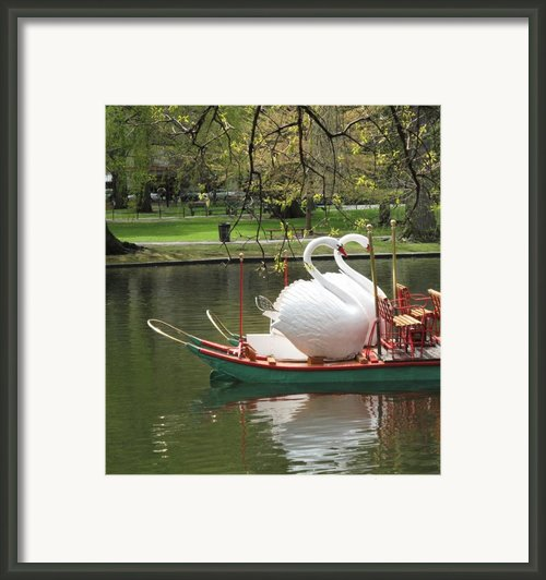 Boston Swan Boats Framed Print By Barbara Mcdevitt