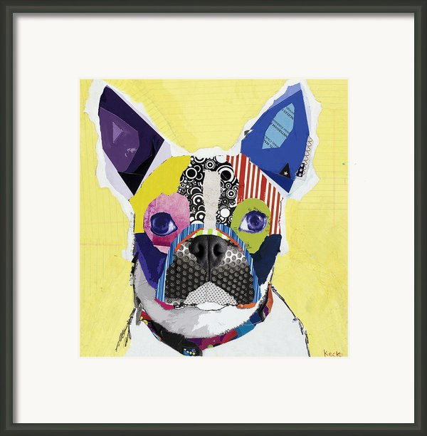 Boston Terrier  Framed Print By Michel  Keck
