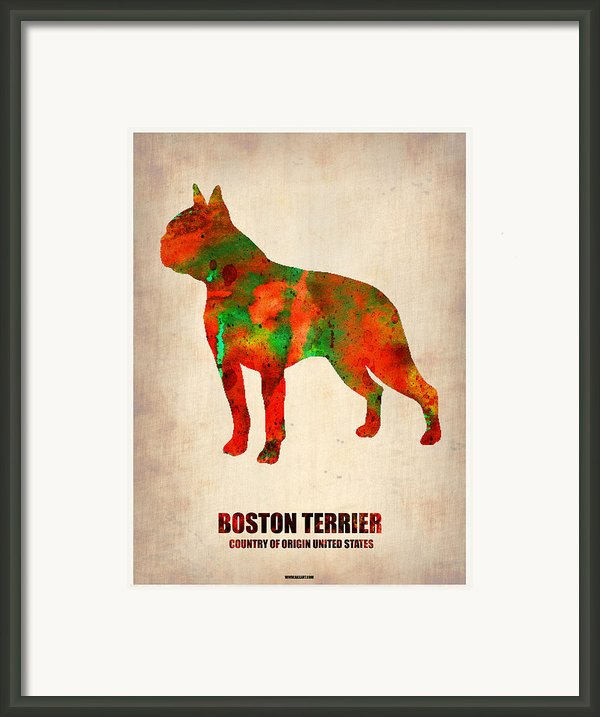 Boston Terrier Poster Framed Print By Irina  March