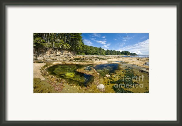 Botanical Beach Framed Print By Matt Tilghman