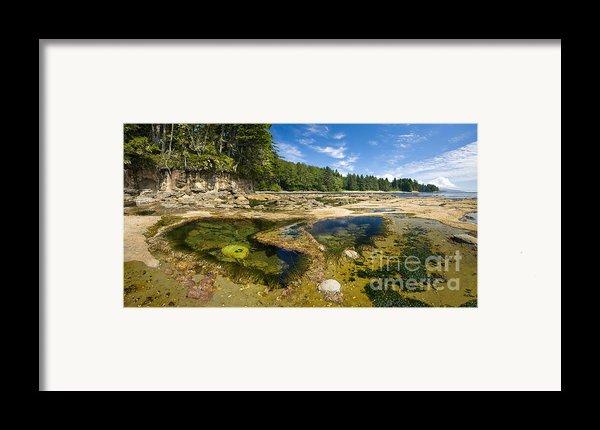 Botanical Beach Framed Print By Matt Tilghman