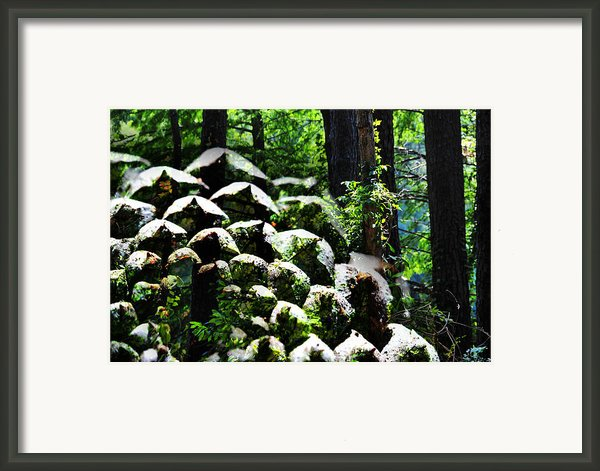 Bounty Framed Print By Skip Hunt