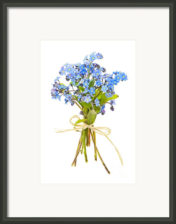 Bouquet Of Forget-me-nots Framed Print By Elena Elisseeva