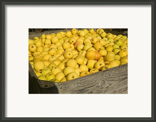 Box Of Golden Apples Framed Print By Garry Gay